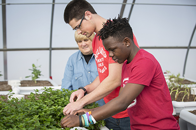Students work in the aquaponics lab